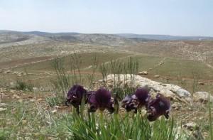 שטח פתוח סמוך לרימונים, קרדיט צילום: החברה להגנת הטבע