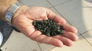 אצות מבית הגידול של יוניברב. במצב מוצק
