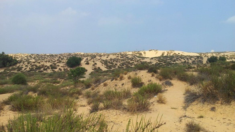 גורמים ירוקים מגישים ערר נגד בניית אזור תעשייה בחולות אשדוד