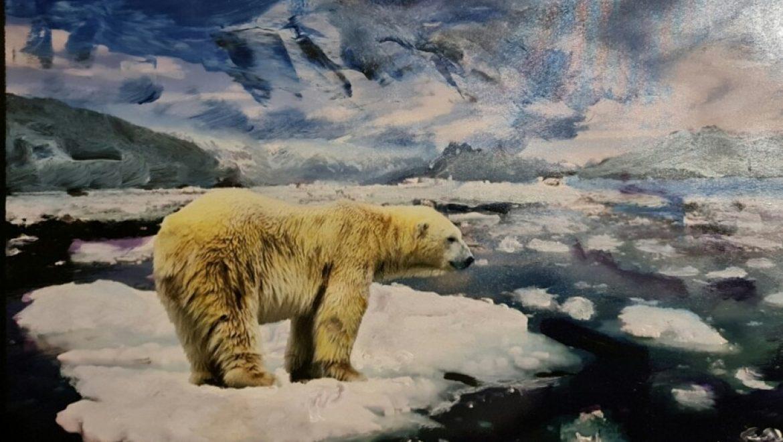 """המדענים המומים: גם """"אזור הקרח האחרון"""" בקוטב """"נמס בטירוף"""""""