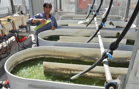 הקמת מתקן פילוט להפקת דלק מאצות מתעכב בשל קשיי מימון
