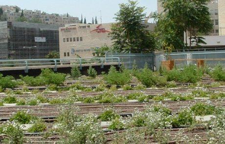 הזמנה: כנס גגות ירוקים- 29.3.2011