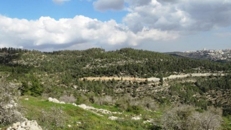 המשרד להגנת הסביבה והחברה להגנת הטבע נגד הבנייה בהרי ירושלים