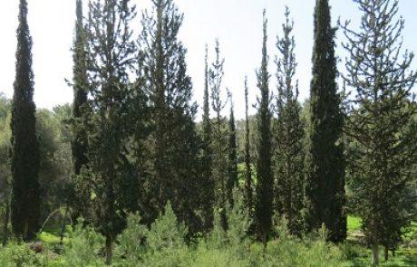 ישראל היא אחת המדינות היחידות בעולם שיש בה יותר עצים כיום מאשר לפני מאה שנה