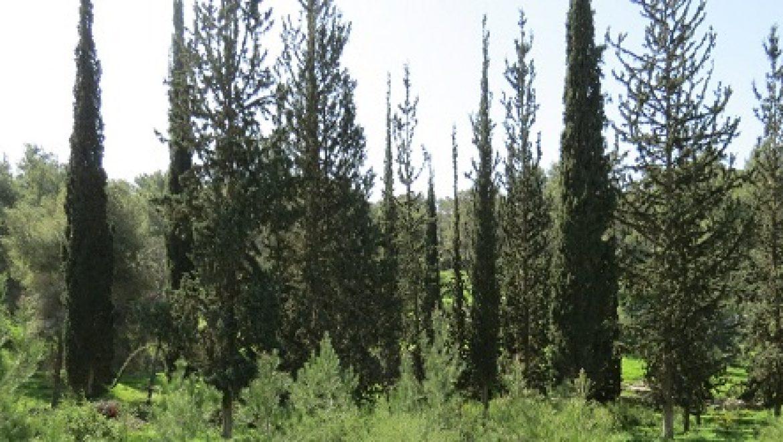 נבחרו עשרת הרשויות הירוקות של ישראל לשנת 2014