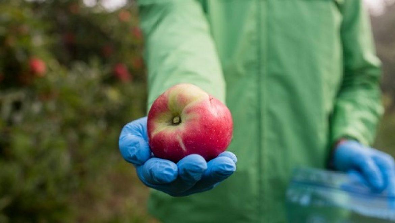 שאריות חומרי הדברה נמצאו בתפוחים