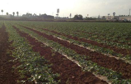 תנועת האיחוד החקלאי: להכליל את המגזר הכפרי ואת החקלאות בקווי היסוד של הממשלה