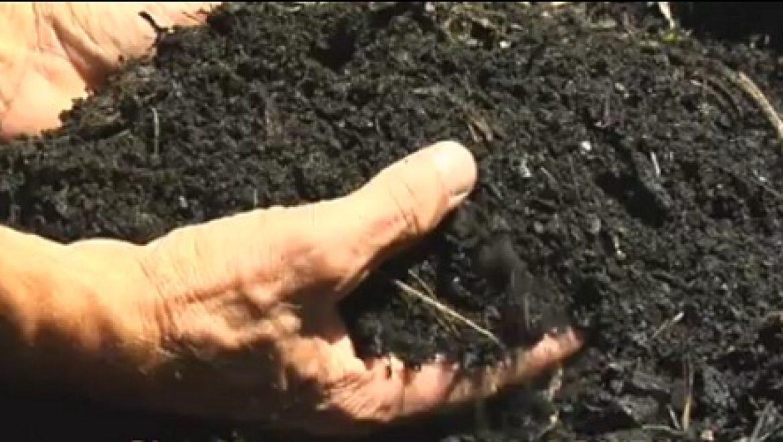 ביוצ'ר – דלק ירוק, קומפוסט לאדמה ולוכד פחמן התורם למאבק להתחממות כדור הארץ