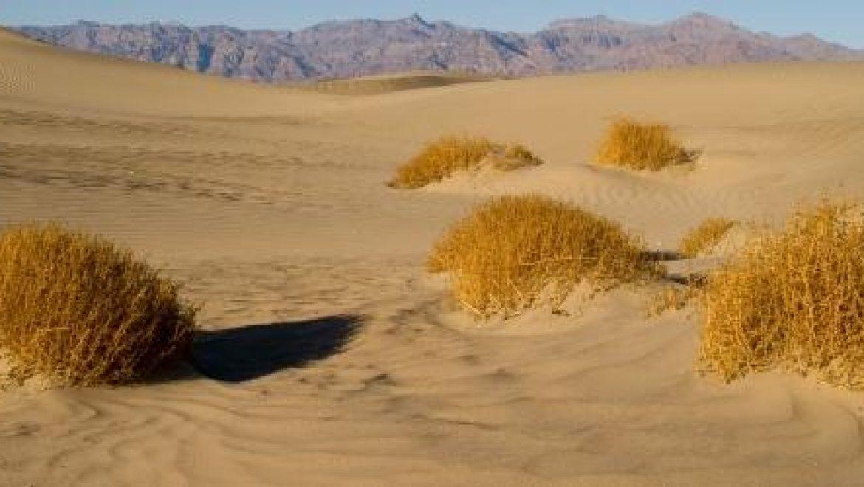 מדענים איטלקים מקררים מזון במדבר בעזרת חום השמש