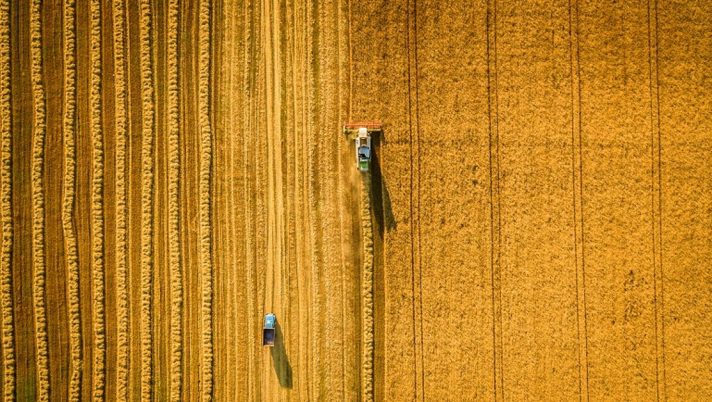 הממשלה אישרה פה אחד: פרופ׳ אלי פיינרמן ימונה לראש מינהל המחקר החקלאי (מכון וולקני)