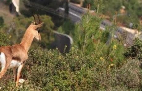 """הקרן הקיימת לישראל: """"מזמינים את הציבור למדורת ענק של כ-3,600 עצים במצפה נפתוח"""""""