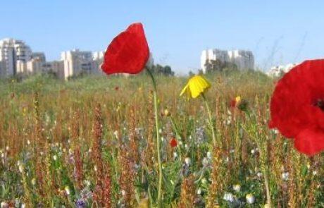 לאן נטייל בעוד חמש שנים? האיום על השטחים הפתוחים בישראל