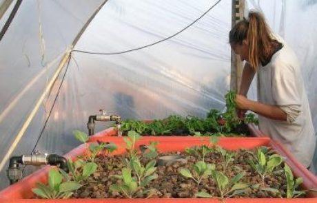 אקוופוניקה – מערכות יצור מזון אינטנסיבי אורגני בחצר הבית