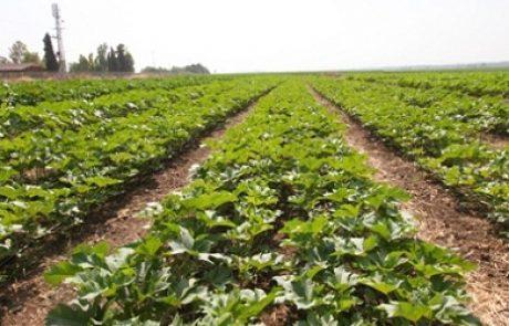 ה-OECD מפרסם את הדוח השנתי שבחן את המדיניות החקלאית בישראל
