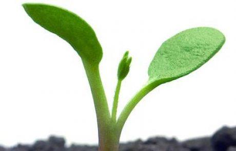 משרד החקלאות מקדם תוכנית לגינות אורגניות בישובים חקלאיים