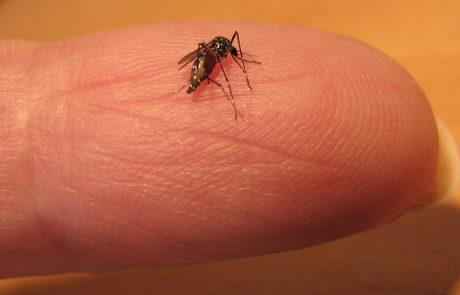 יתושים נגועים בנגיף קדחת מערב הנילוס נתגלו בצפון ירושלים, מדרום לנתניה ובטייבה