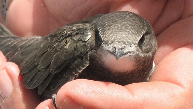 """בית גידול ייחודי לציפורים יוקם על גג המגדל הירוק """"עזורי אקו-טאואר"""""""