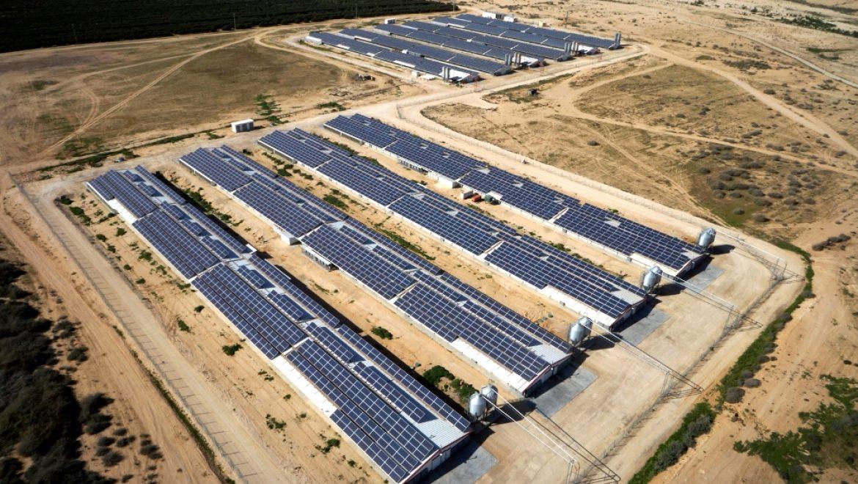 נבחרו הזוכים במכרז הראשון של רשות החשמל להקמת מתקני ייצור חשמל סולאריים
