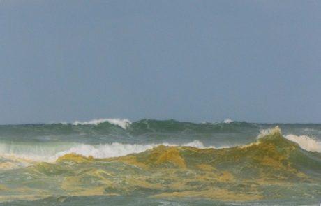 המים הצהובים בחופי פלמחים – פריחת אצות