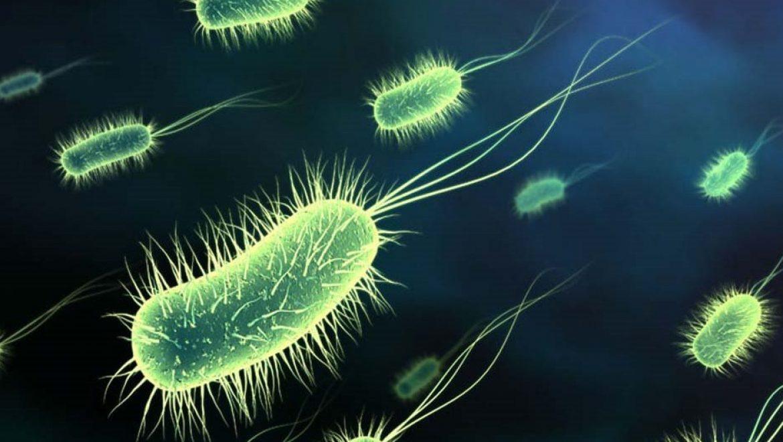 מחקר: בקטריה ייחודית תייעל נצילות הפאנלים הסולאריים