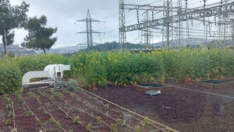 חברת החשמל משיקה גג ירוק מחקרי בתחנת משנה בירושלים