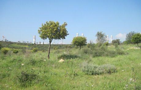 בעקבות מעבר לחשבון חשמל במייל: 1,000 עצים נטעו ביער חגית