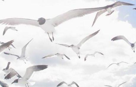 טורבינות רוח וציפורים