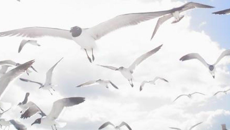 """בארה""""ב מנסים למזער את השפעת טורבינות הרוח על ציפורים וחיות בר"""
