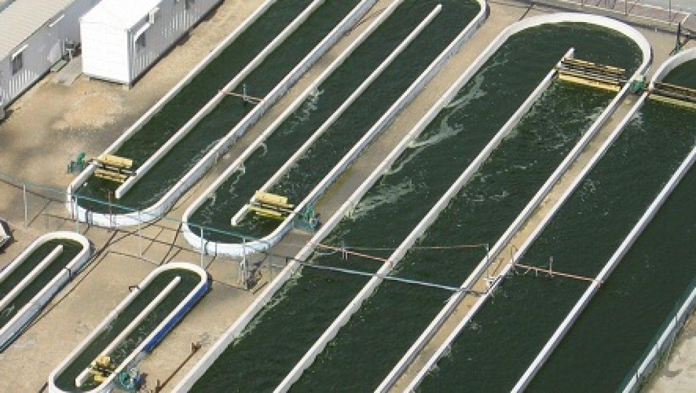 פטנט עולמי ייחודי: גידול מיקרו-אצות בעזרת גזים מארובות תחנת הכח