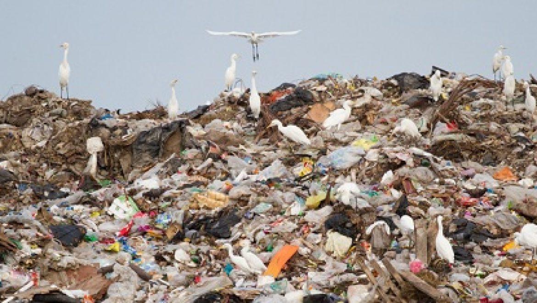 """מכת אשפה: הישראלי הממוצע ייצר כ-15.5 ק""""ג פסולת במהלך החג"""