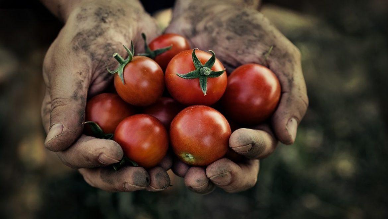 אדמה תשיק טכנולוגיה חדשנית להגדלת יבול חקלאי בעזרת האינטרנט של הדברים