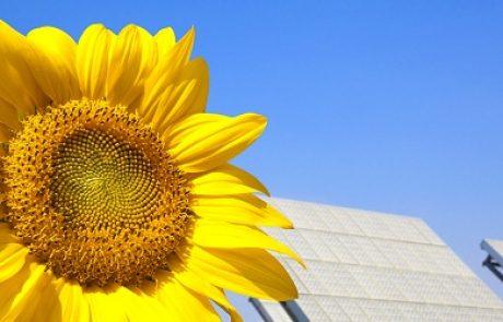סאנפלאואר רושמת צניחה חדה ברווחים החציוניים של 2013