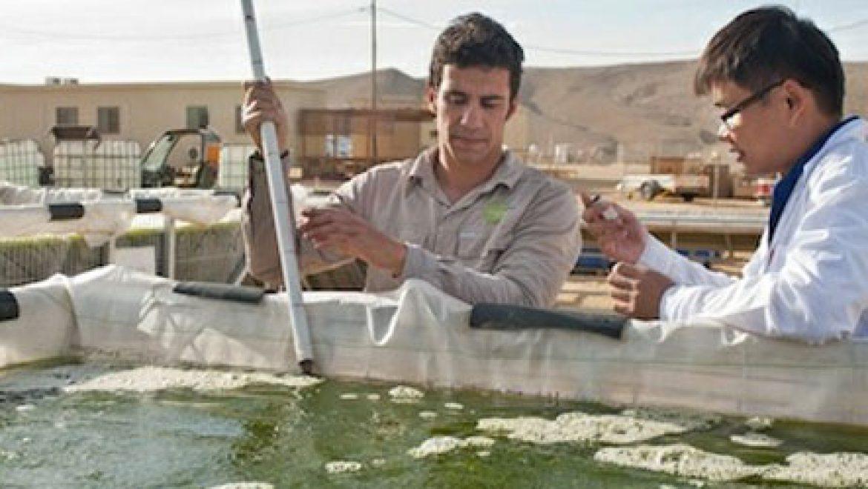 חזון ישראלי: חוות אצות של אלפי דונם תייצר דלק לתחבורה